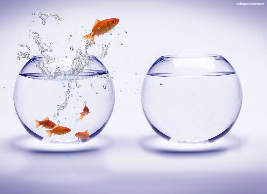 Moving Fish Bowl Wallpaper - WallpaperSafari | Android | Pinterest ...