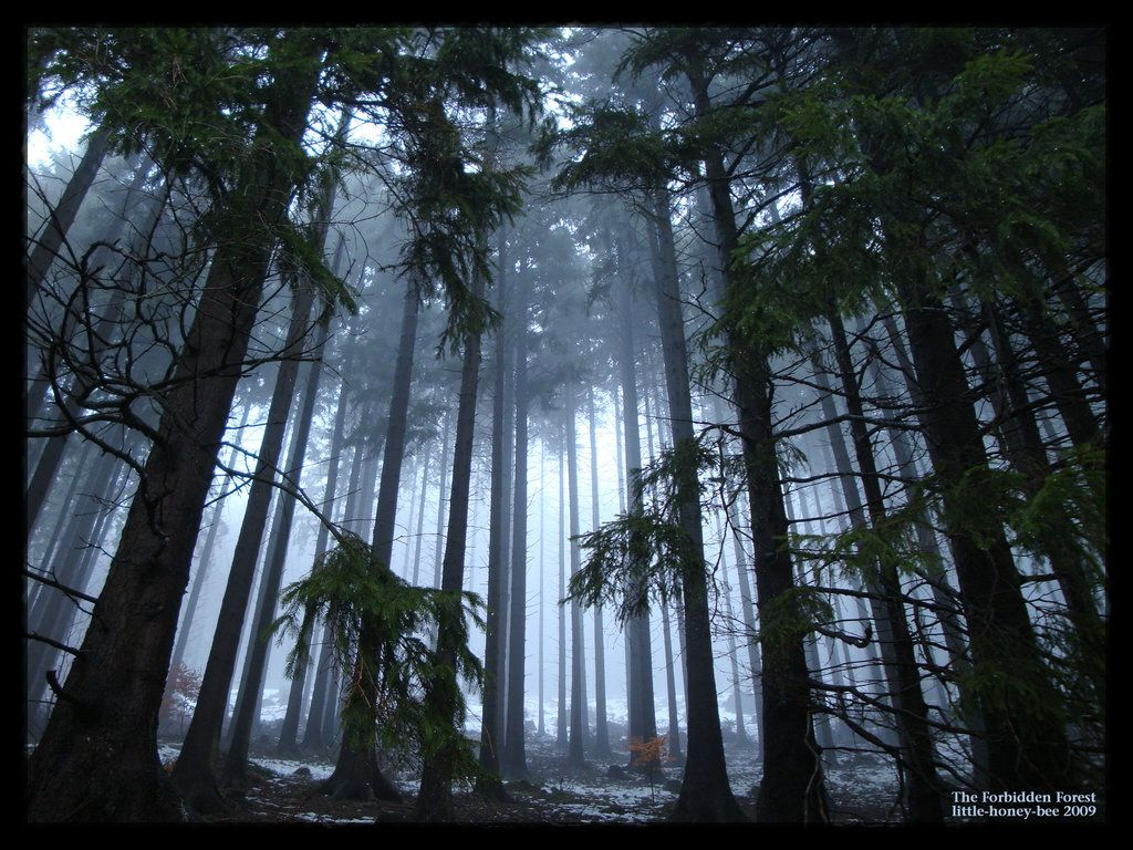 Wallpapers For Forbidden Forest Wallpapers | www.showallpapers.com