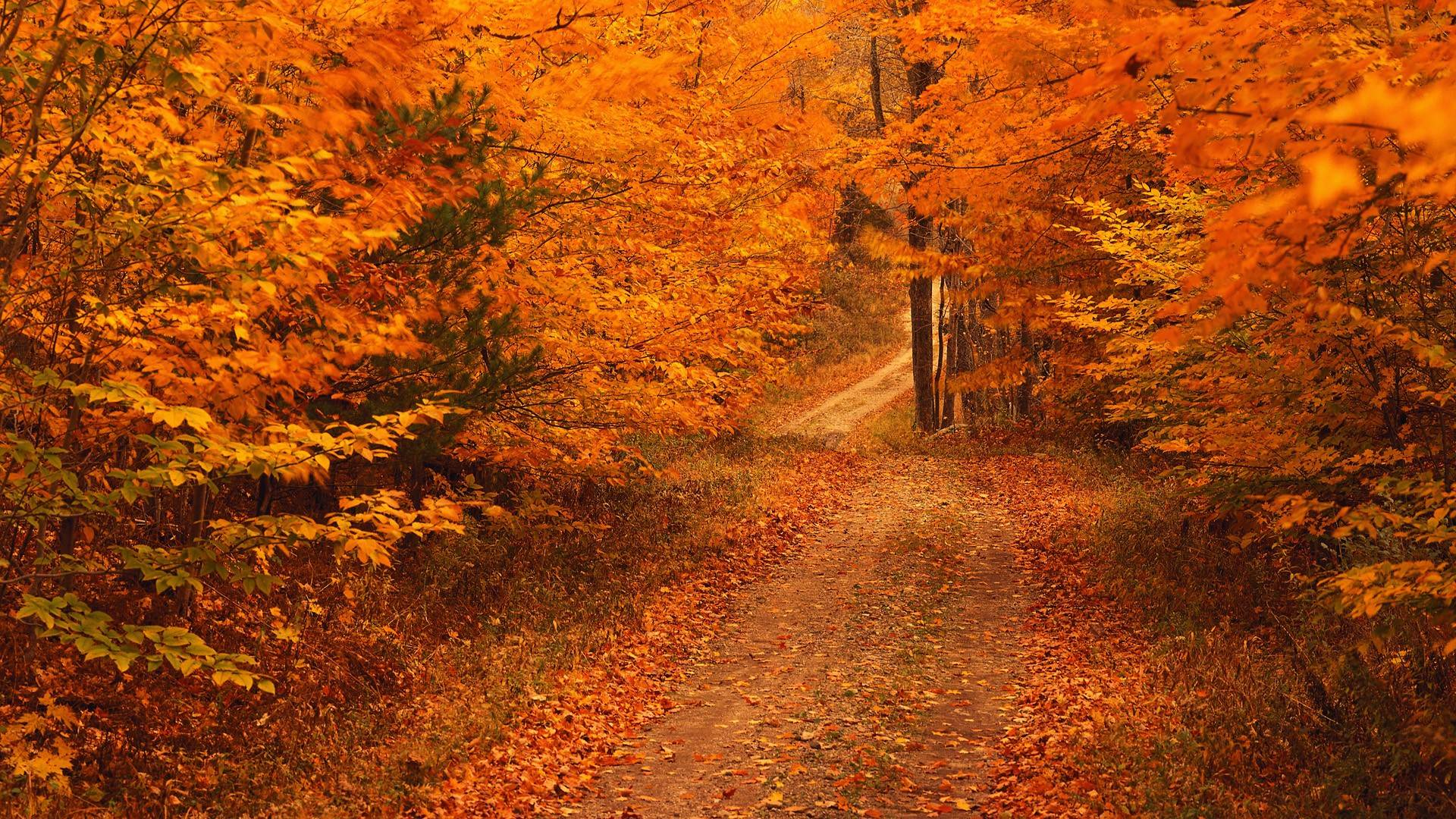 Autumn Images Backgrounds Indi Photos And Pictures