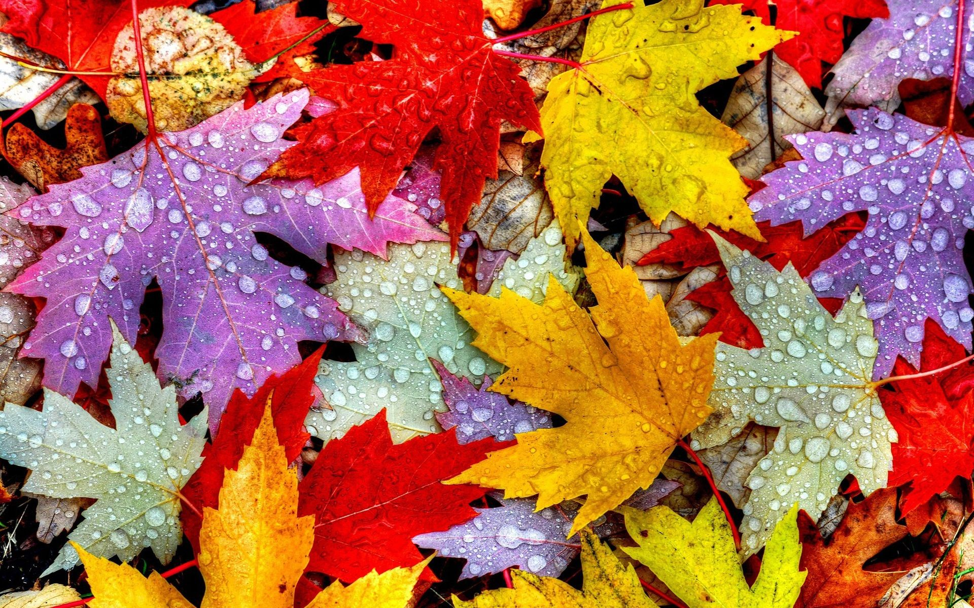 Water Drop and Autumn Leaves Wallpaper 54