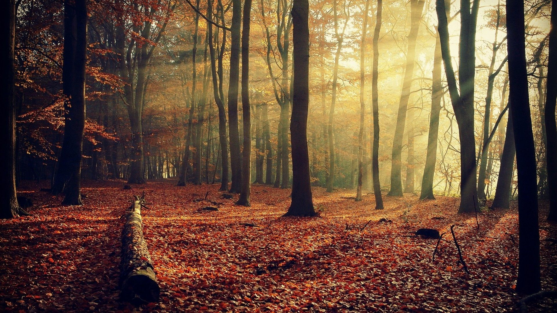 Image - Wallpaper.wiki-Autumn-Forest-Sunshine-Full-HD-Background-PIC ...