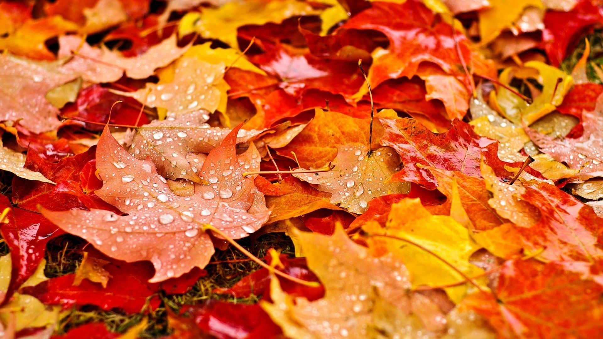 Water Drop and Autumn Leaves Wallpapers