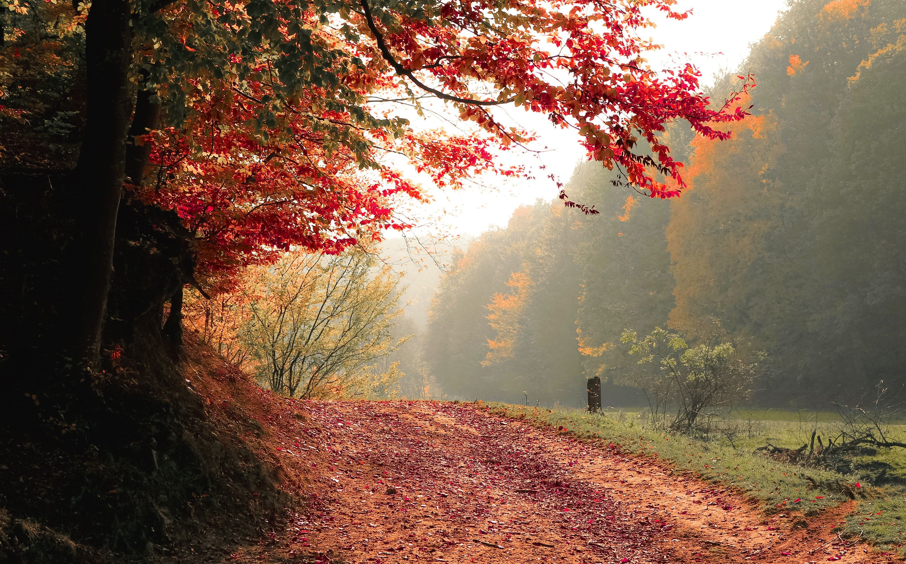 Autumn Fall Wallpapers