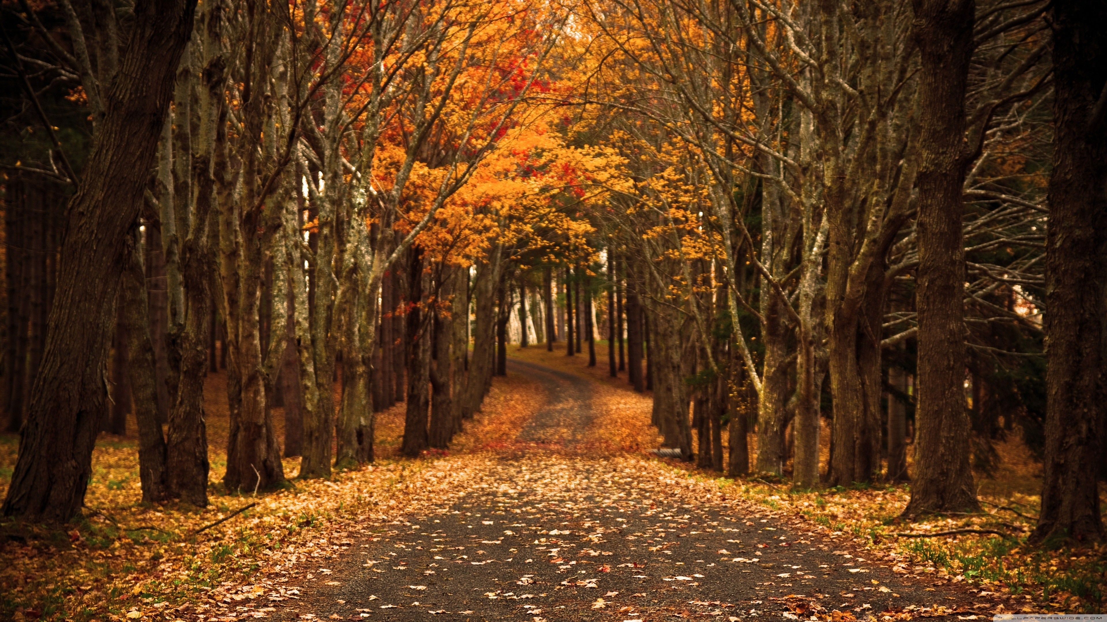 River forest Autumn Wallpapers Awesome Hd Autumn Wallpaper ·â ...