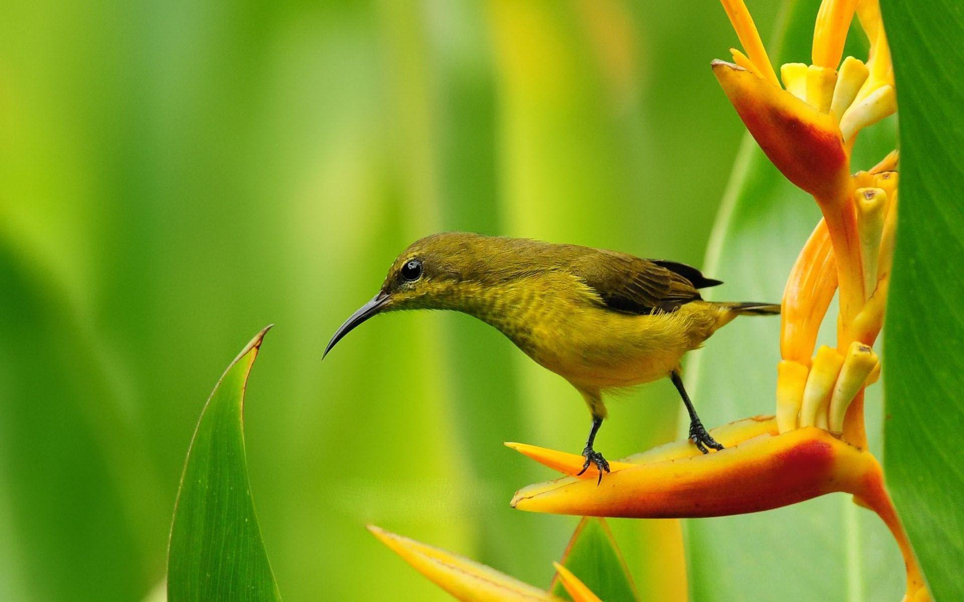Spring Flowers And Birds Wallpaper Background 1 HD Wallpapers ...