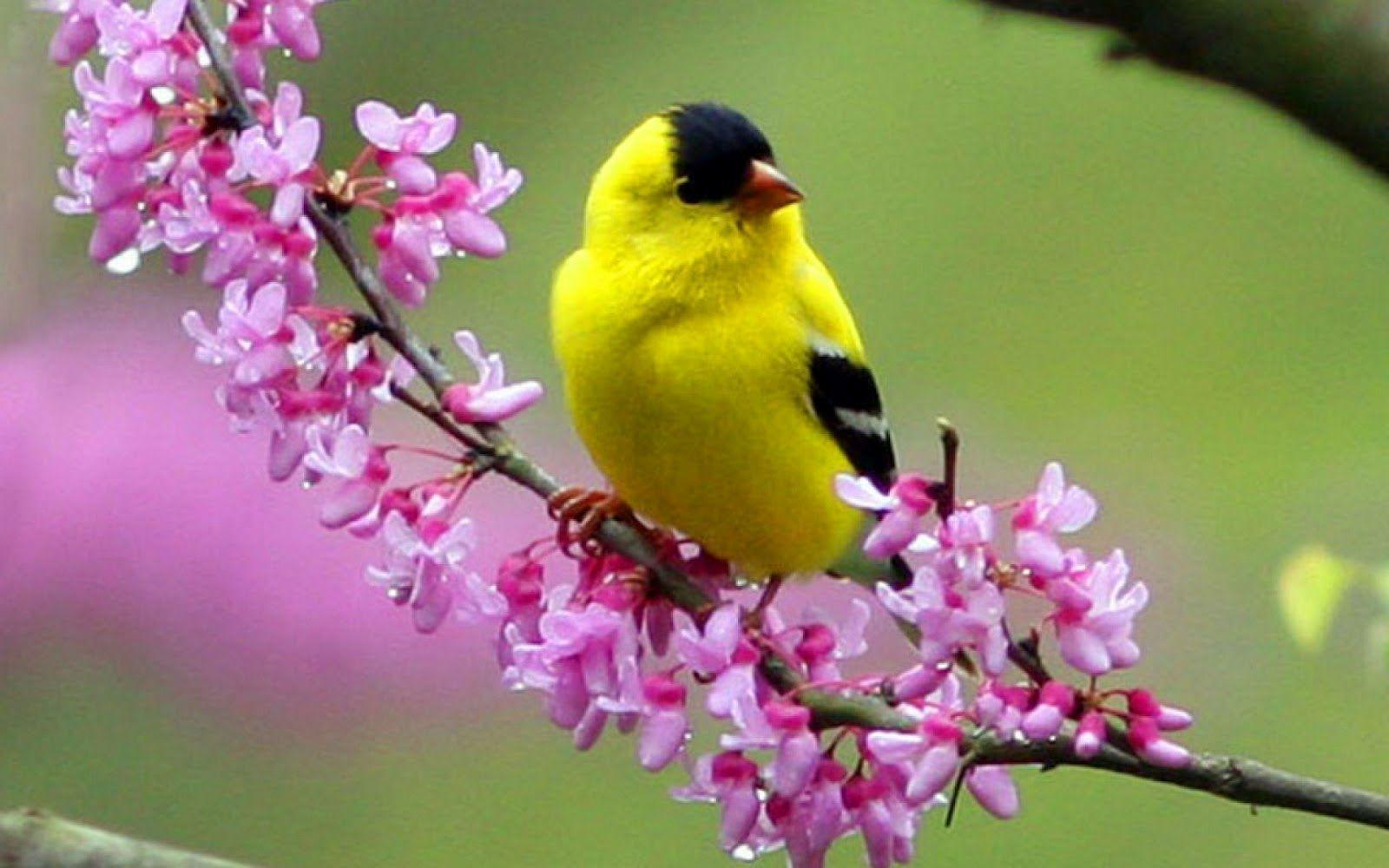 Colorful Little Bird HD Wallpaper - HD Wallpapers Inn