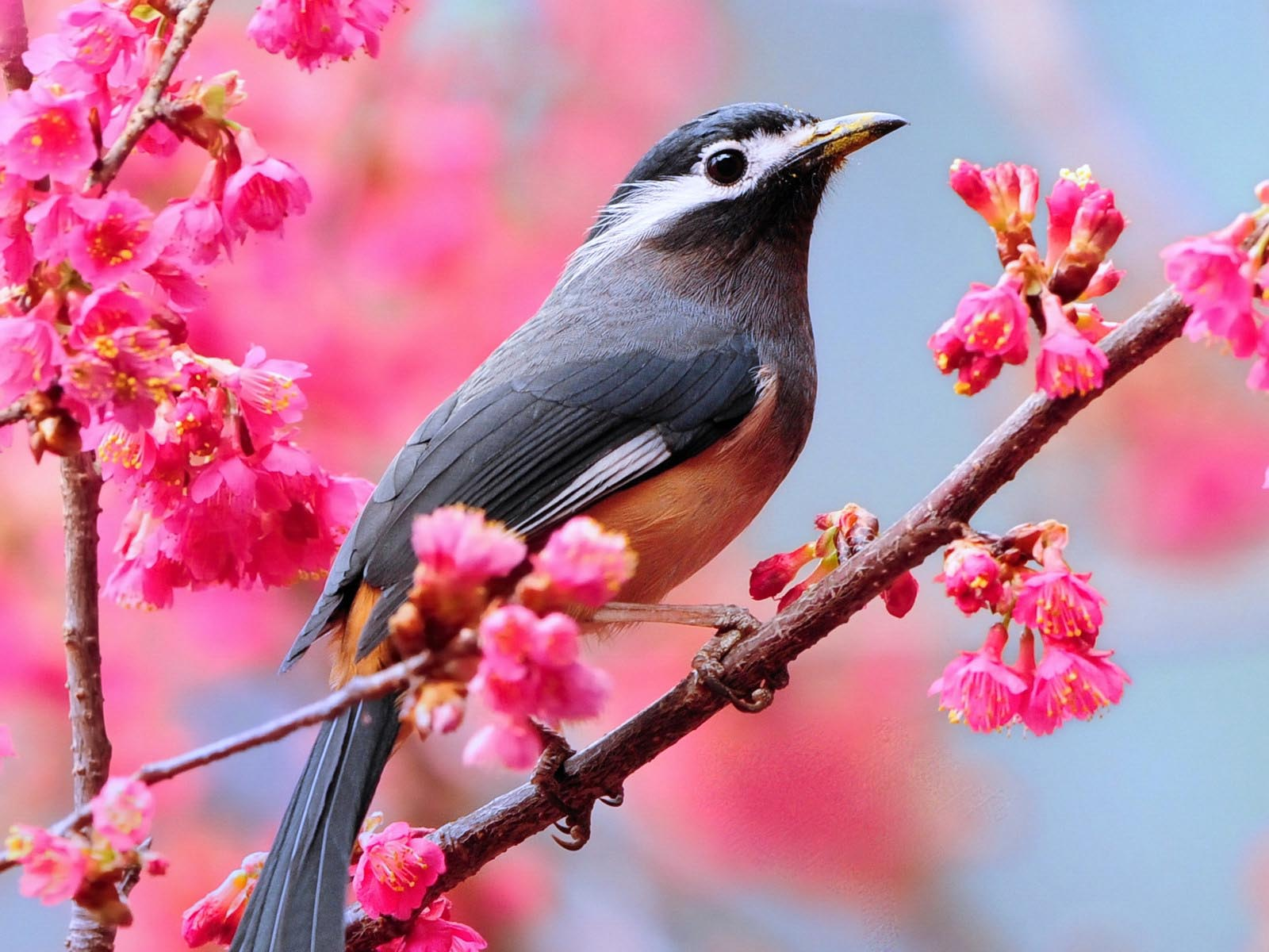 Birds Wallpaper: Love Birds Desktop Wallpapers #2172 |.Ssofc