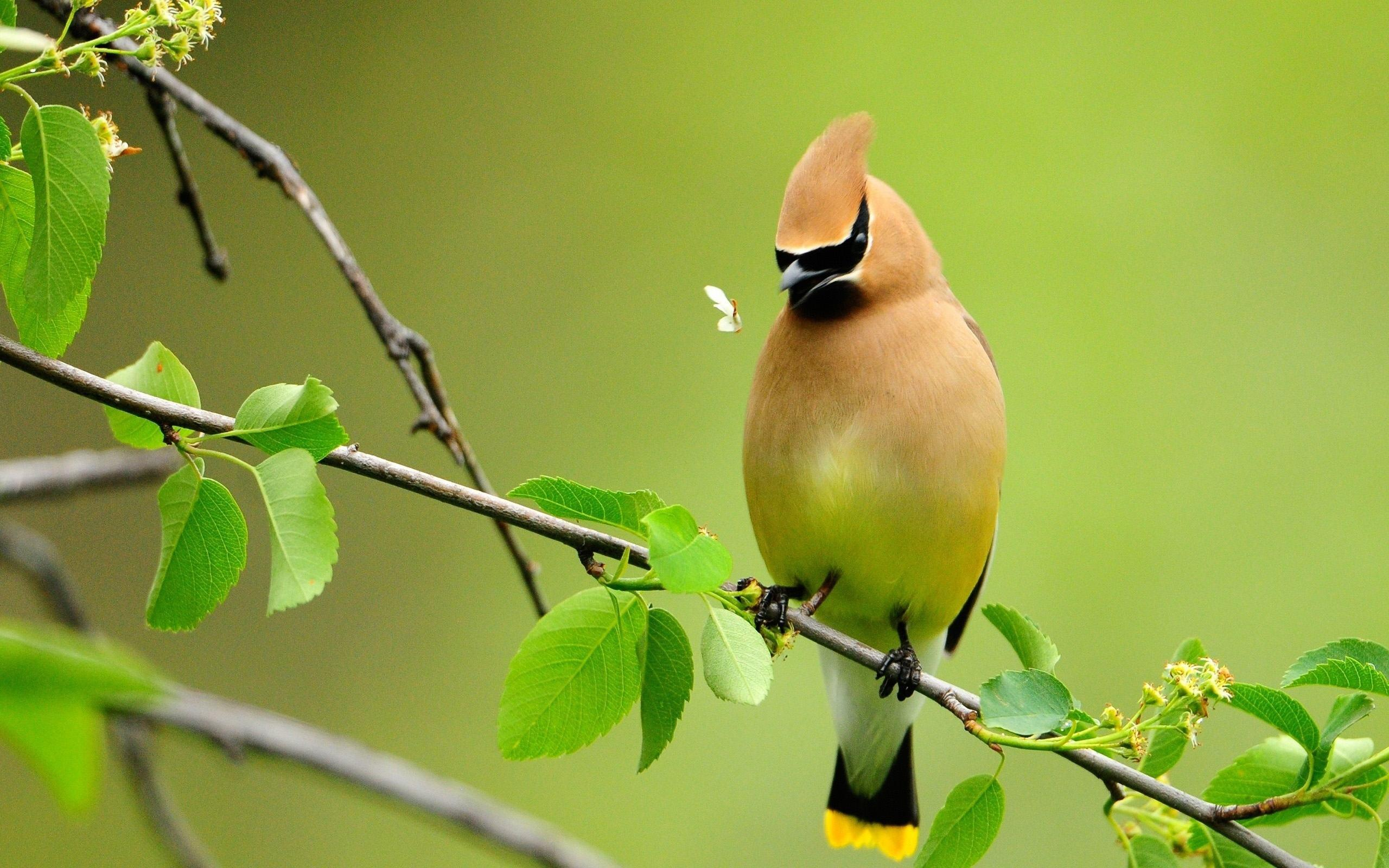 Beautiful Birds Wallpapers - Full HD wallpaper search