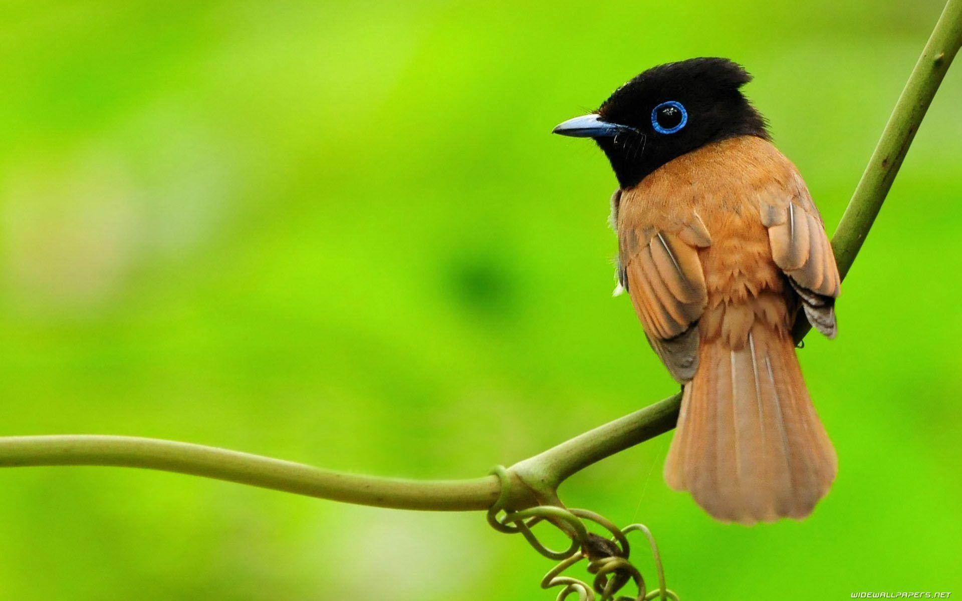 1417739148_bird-wallpapers- ...