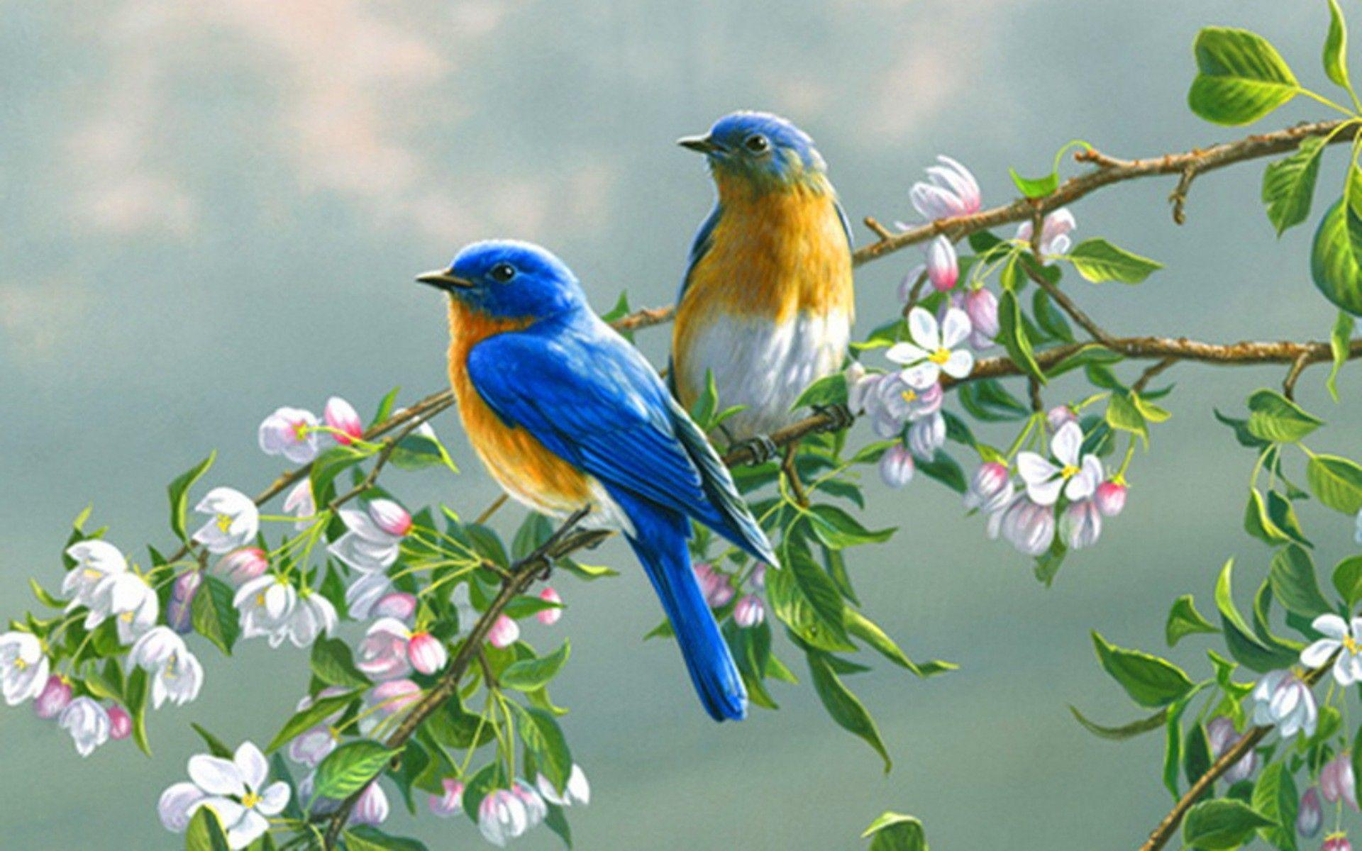 Birds Wallpapers - Full HD wallpaper search