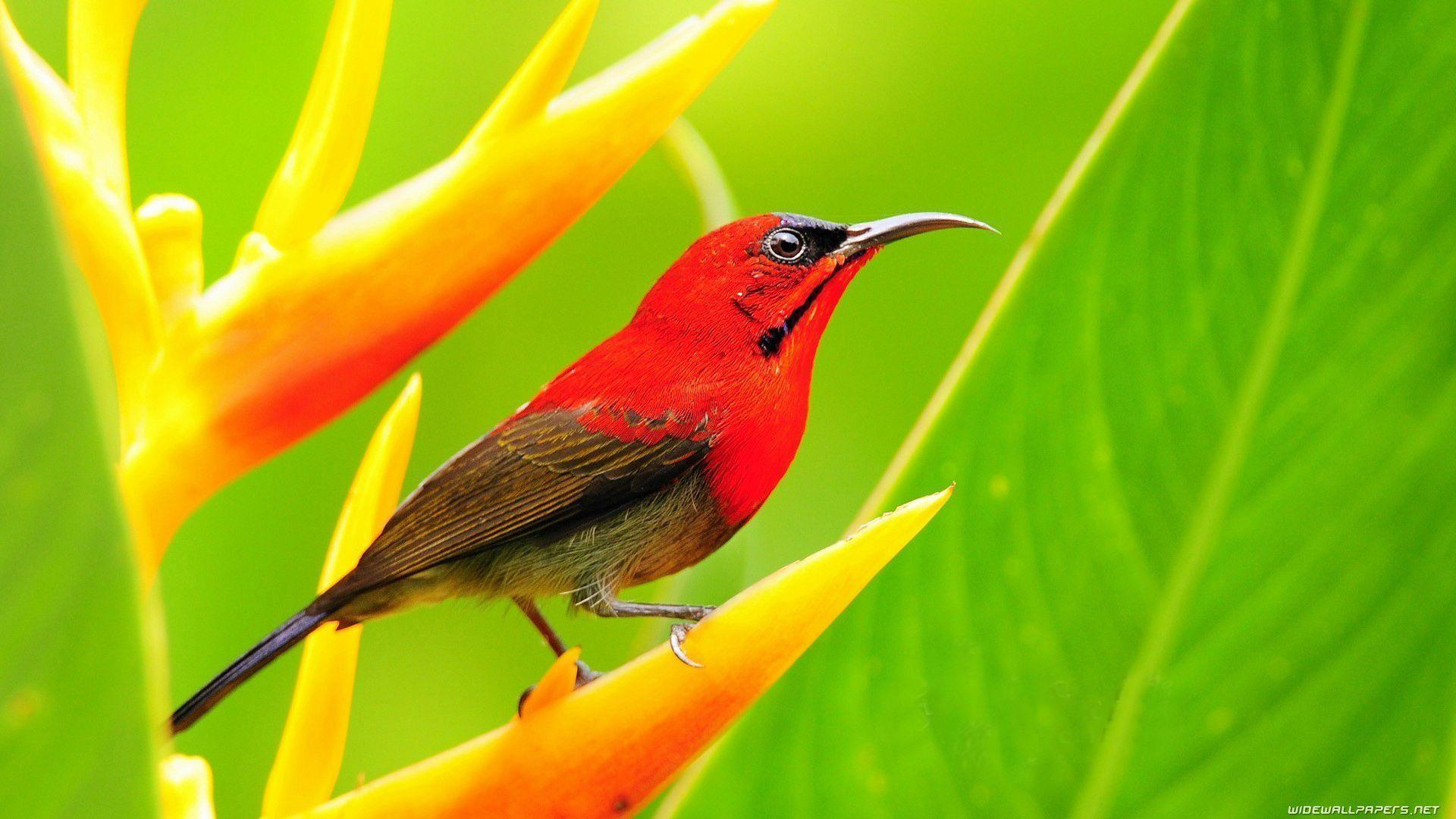 Birds Wallpaper For Walls - animals-