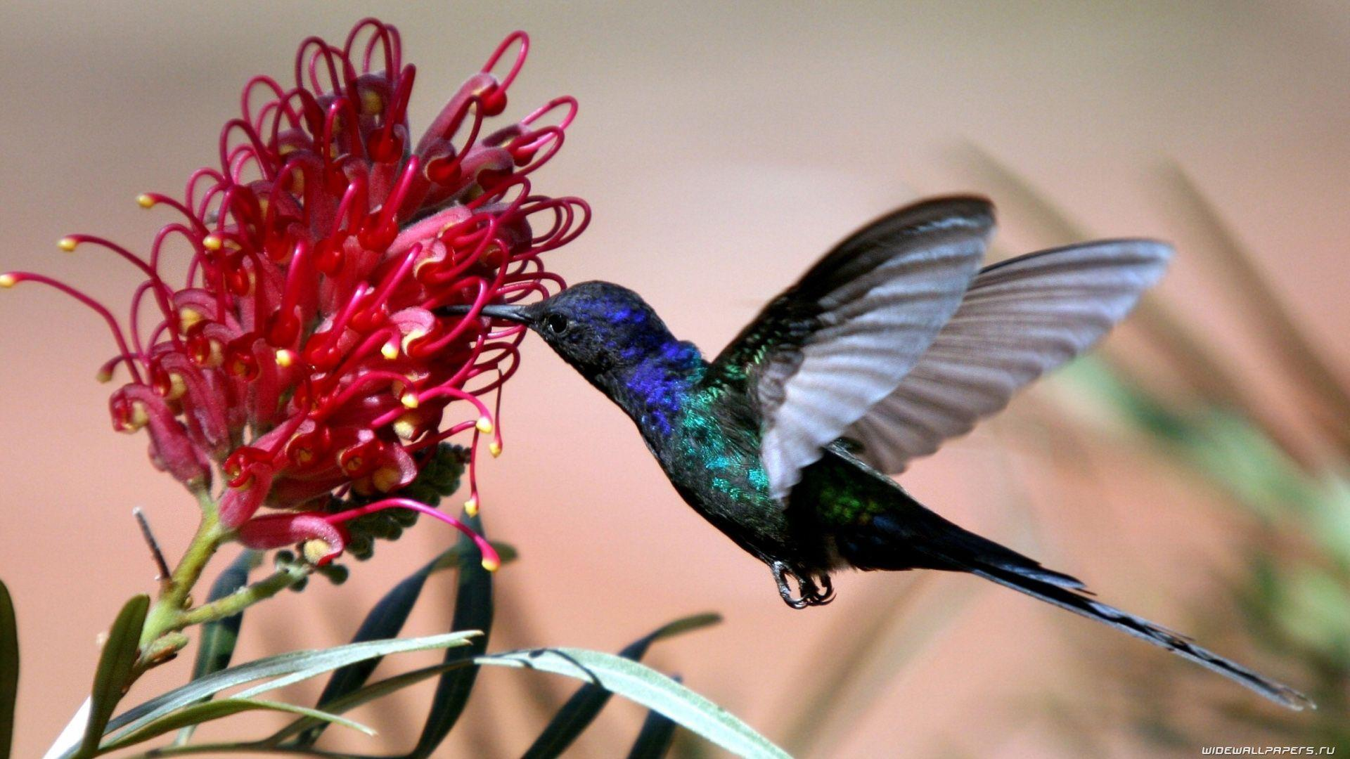 Bird And Flower Wallpapers