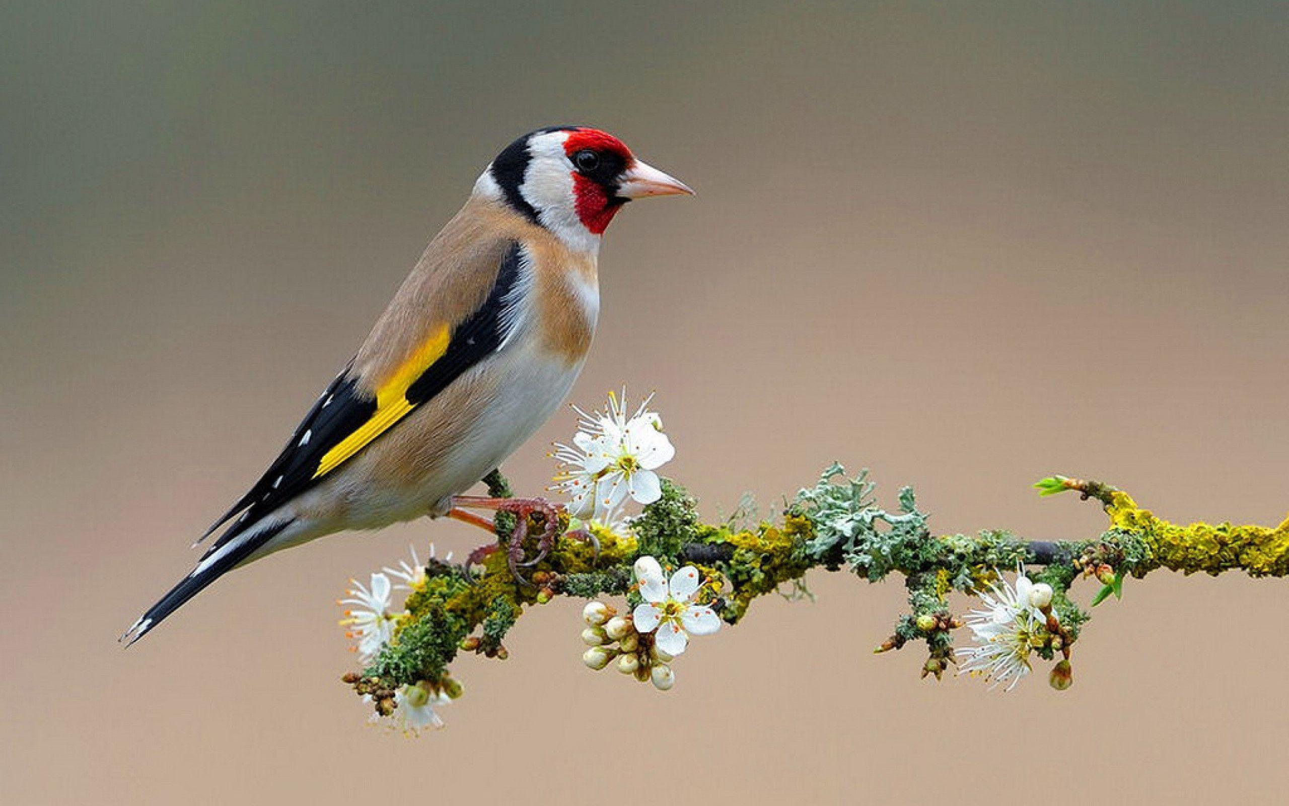 Of Birds Wallpapers and Backgrounds