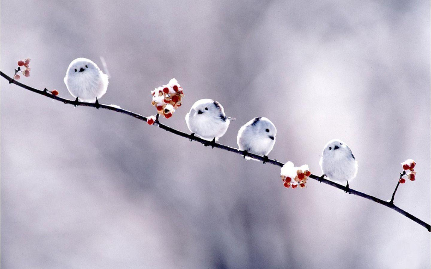 New Bird Wallpaper - animals-