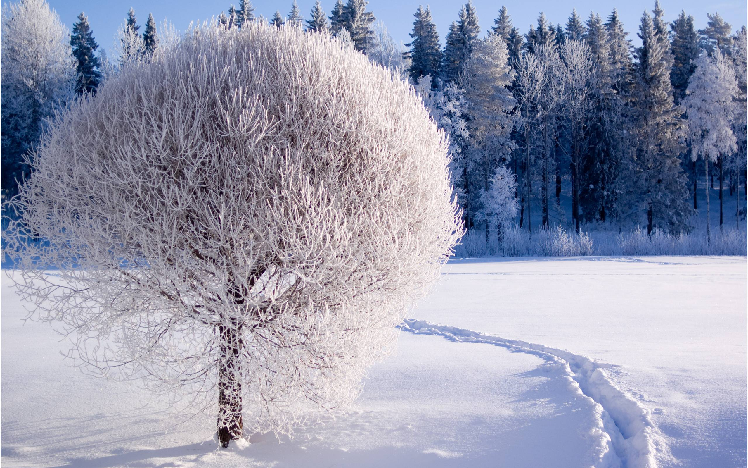 1682 Winter Wallpapers   Winter Backgrounds