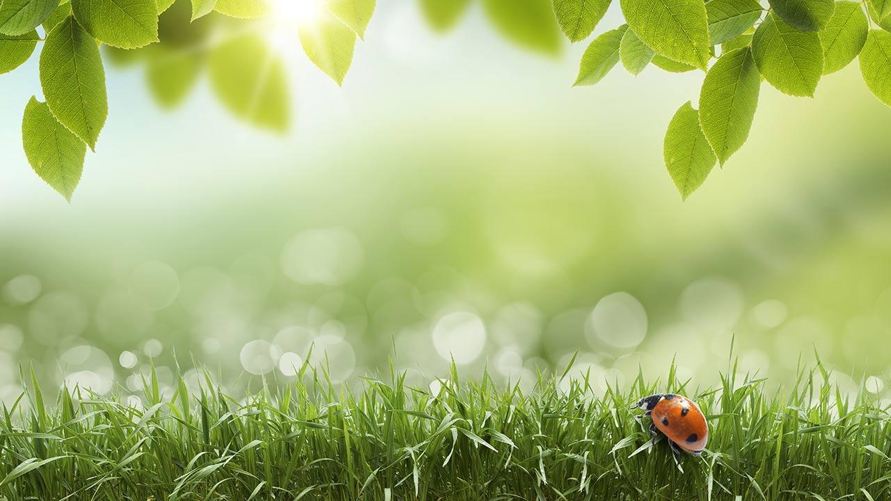 Green Spring Live Wallpaper - Android Apps and Tests - AndroidPIT