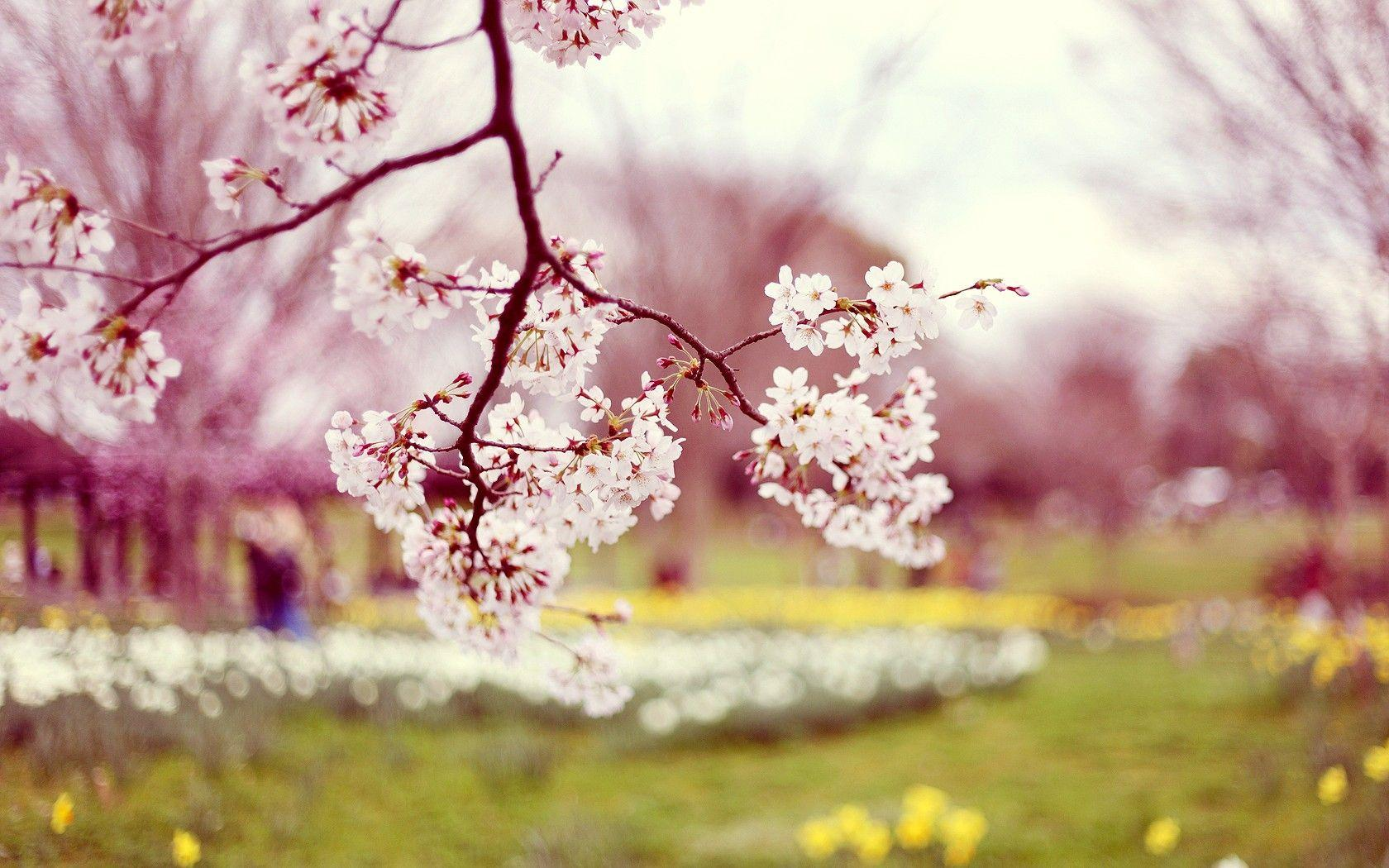 Wallpaper's Collection: «Spring Wallpapers»