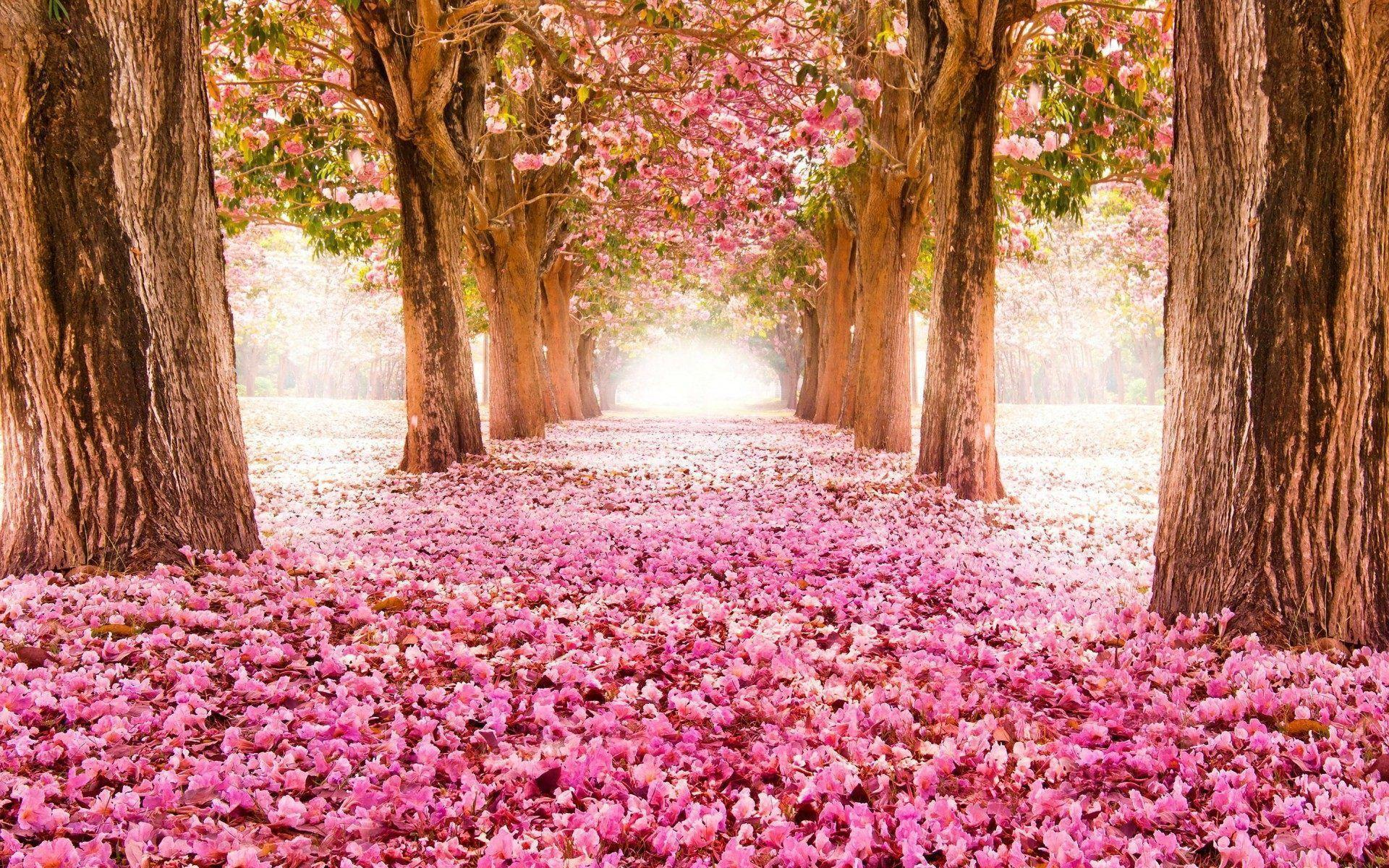 Spring flowers wallpapers HD | HD Wallpapers, Backgrounds, Images ...