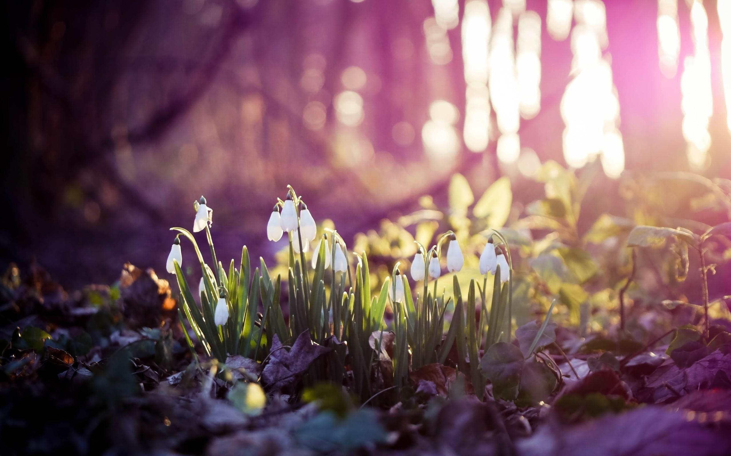 Spring Widescreen Wallpapers Group (82+)