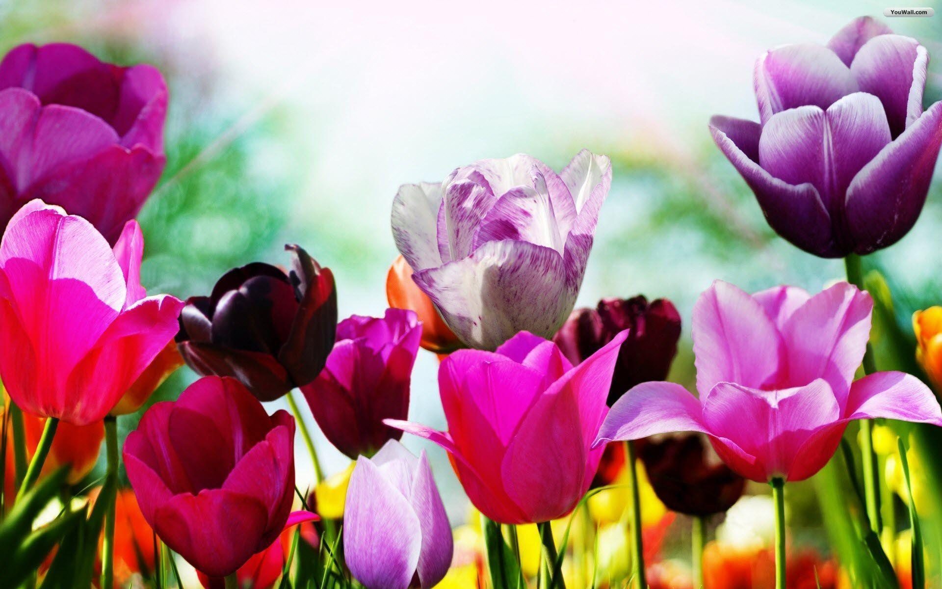 Spring Wallpapers Free Download Group (77+)
