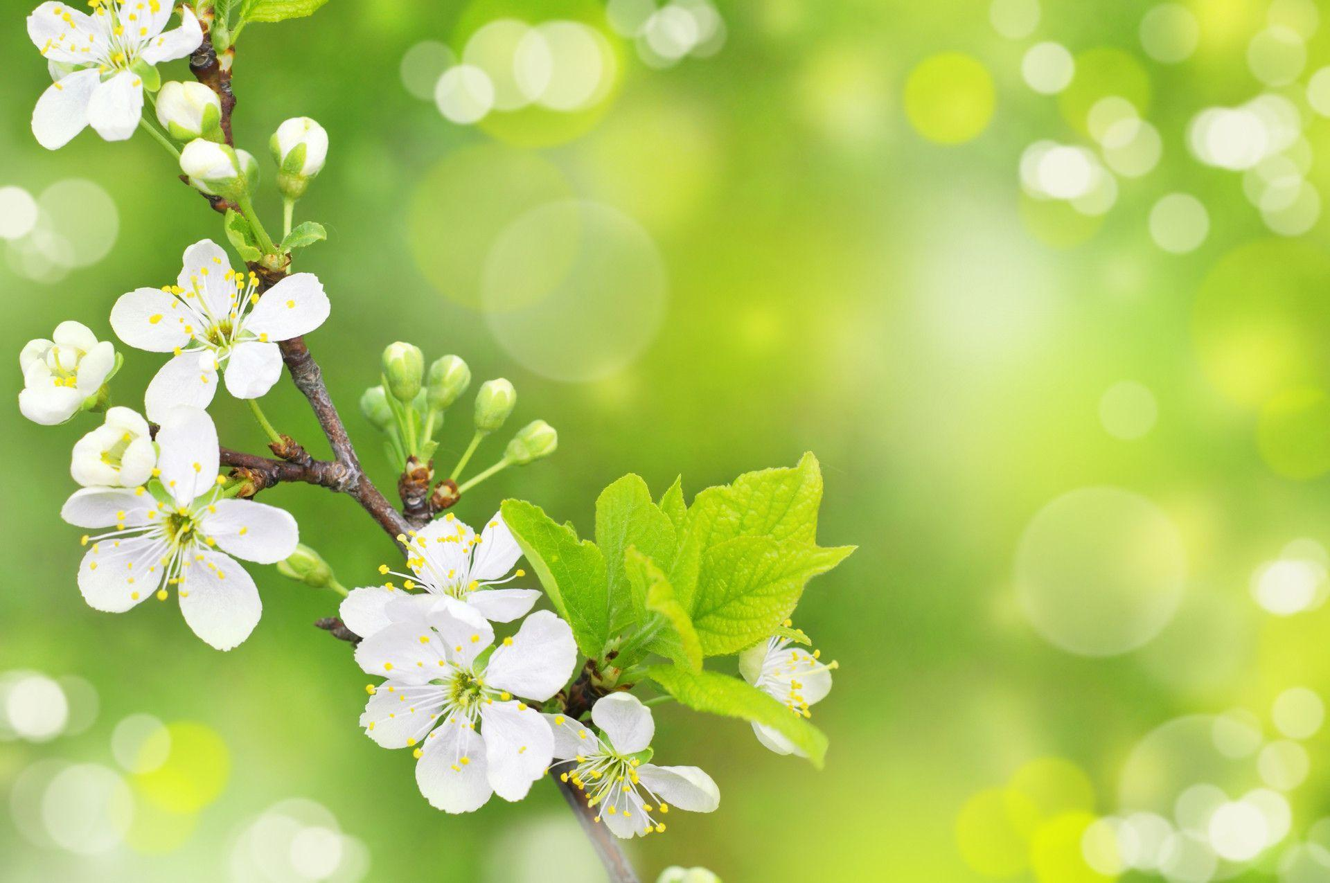 Category: Spring Wallpaper | Download HD Wallpaper›› Page 0 ...