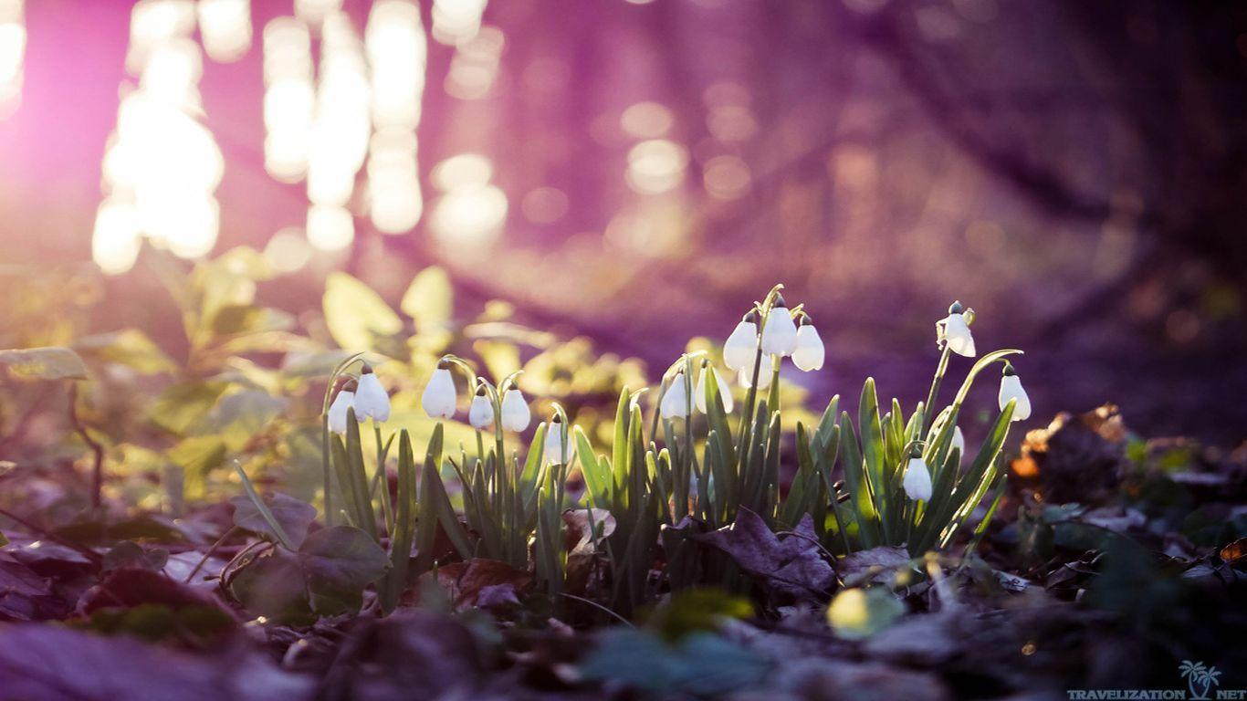 Spring Wallpapers HD Group (78+)