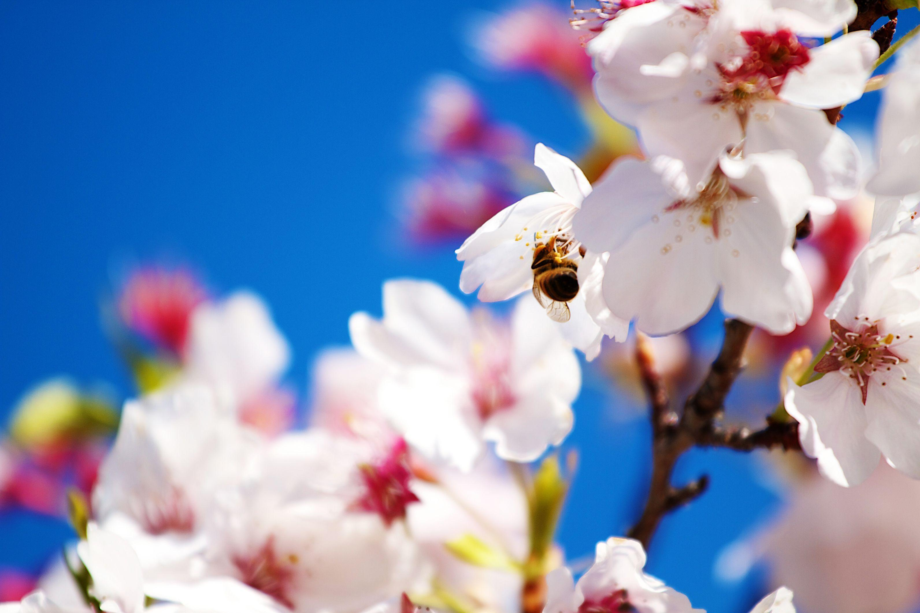 Spring Scenes Wallpapers Group (78+)