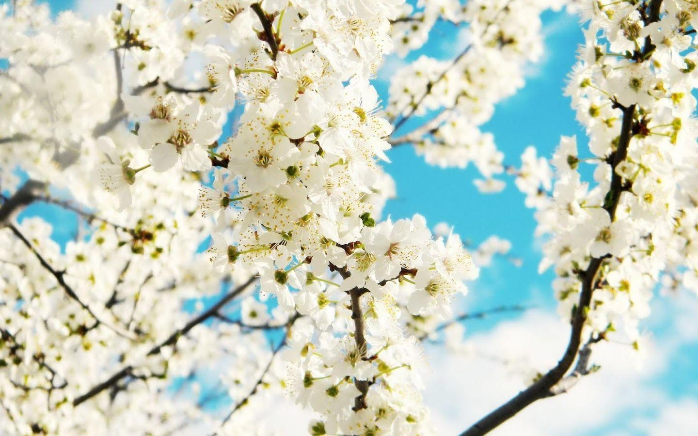 Spring Wallpaper - Android Apps on Google Play