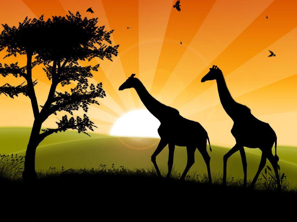 Safari Wallpaper | HD Wallpapers Pro