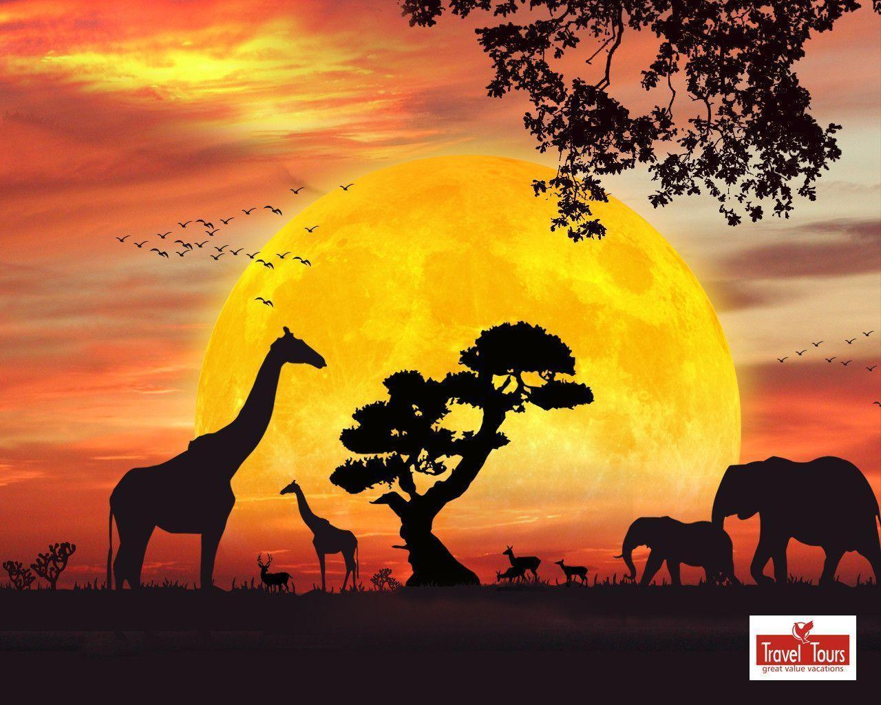 African Safari Live Wallpaper for Android 512x307PX ~ Wallpaper ...