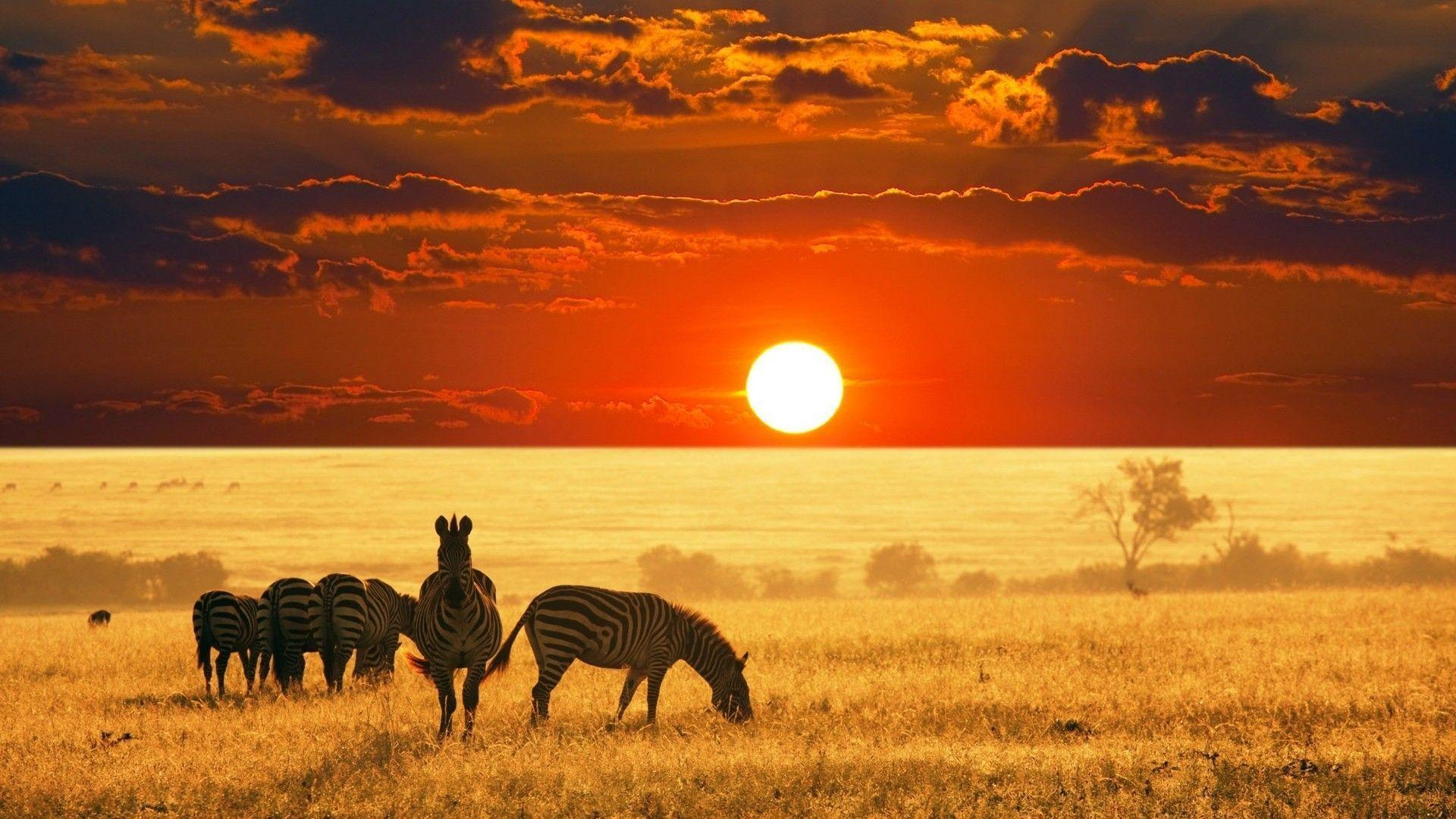 Wild Animals Safari Background Wallpaper - Animal Powericare.