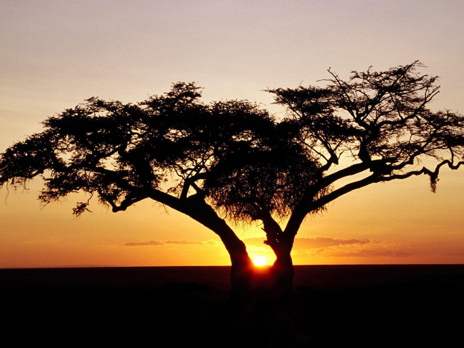 HD Wallpapers: 1600x1200 » Nature » Safari Sunrise, Africa Free ...