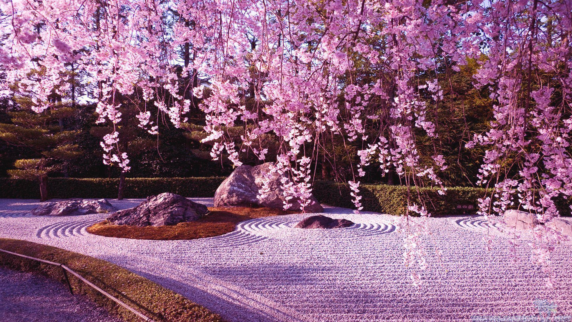 10 Gorgeous pictures of Cherry Blossom Lake, Japan | Art ...