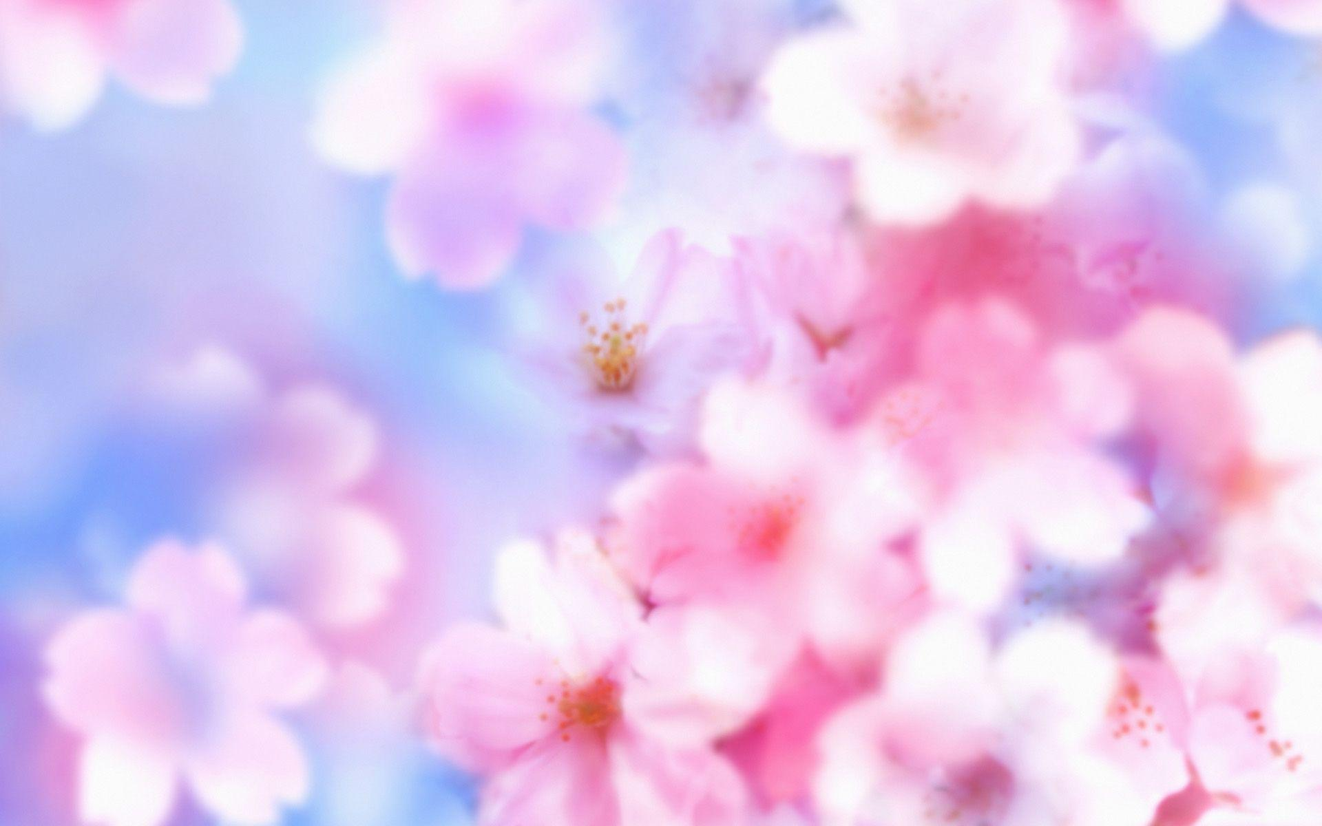 Most Downloaded Cherry Blossom Wallpapers - Full HD wallpaper search