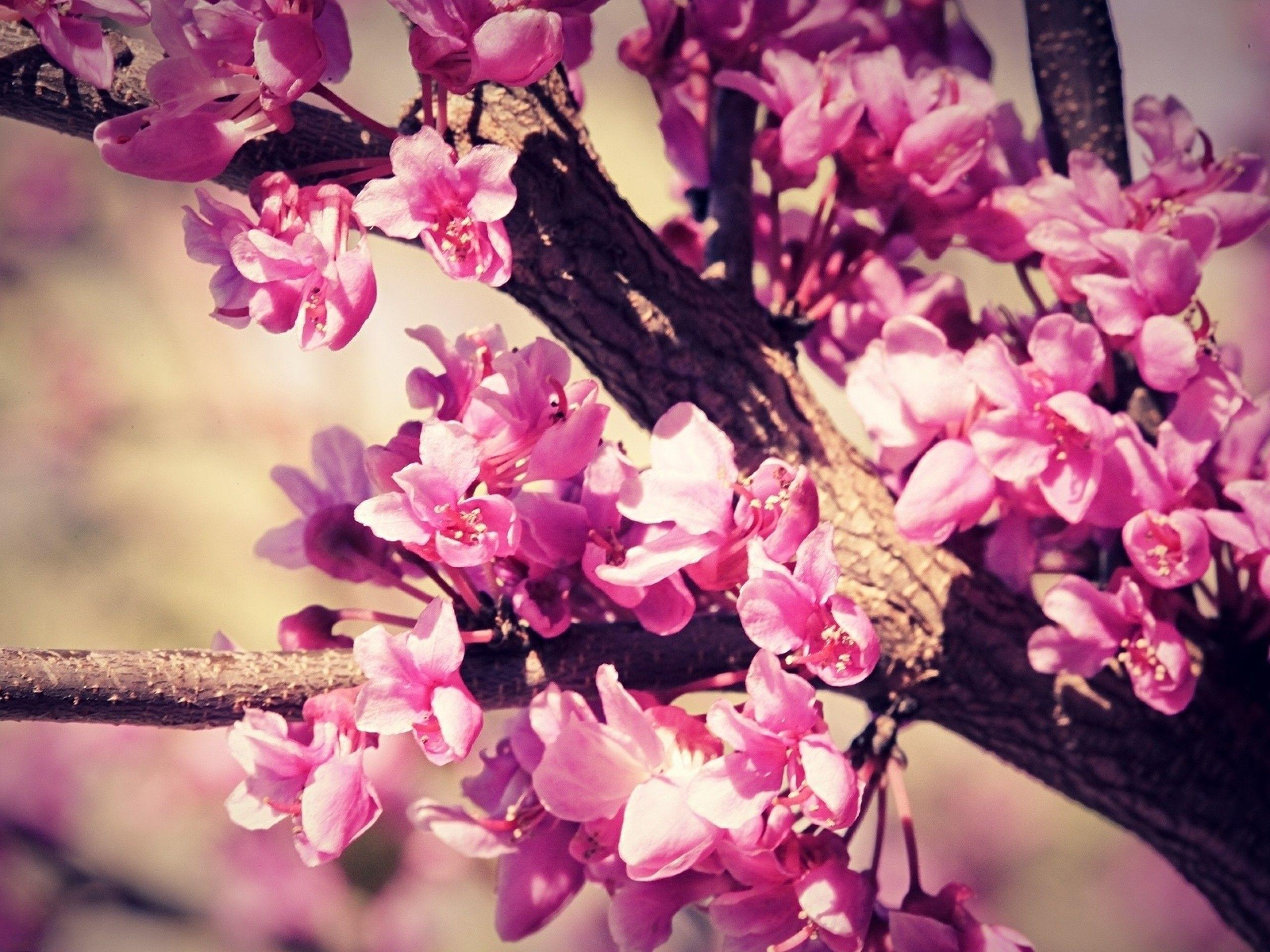 Category: Flowers Wallpaper Page 2 | High Resolution ...