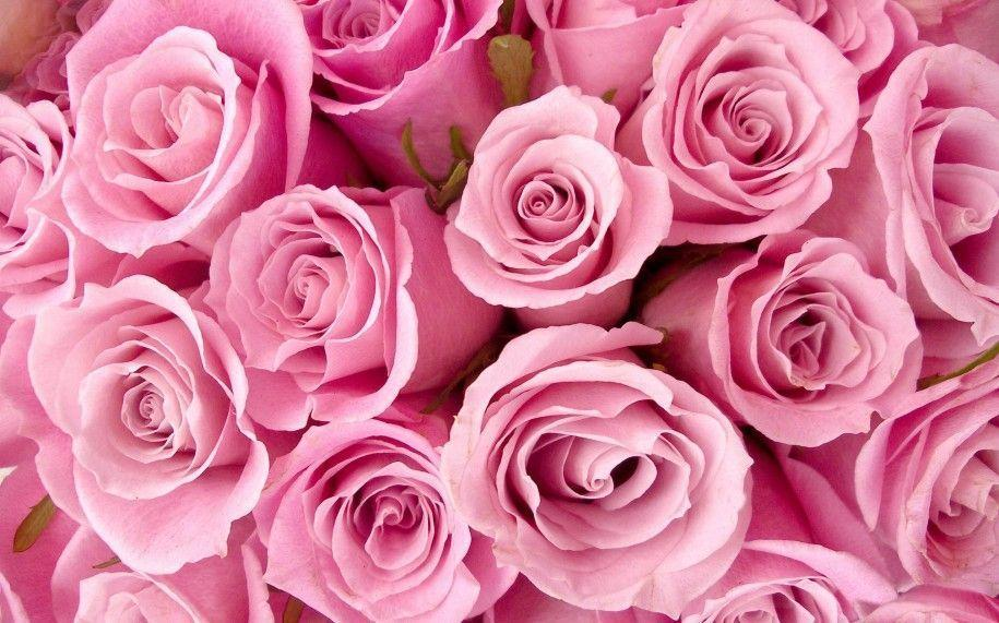 Roses Wallpaper Download Widescreen 2 HD Wallpapers | Hdimges.