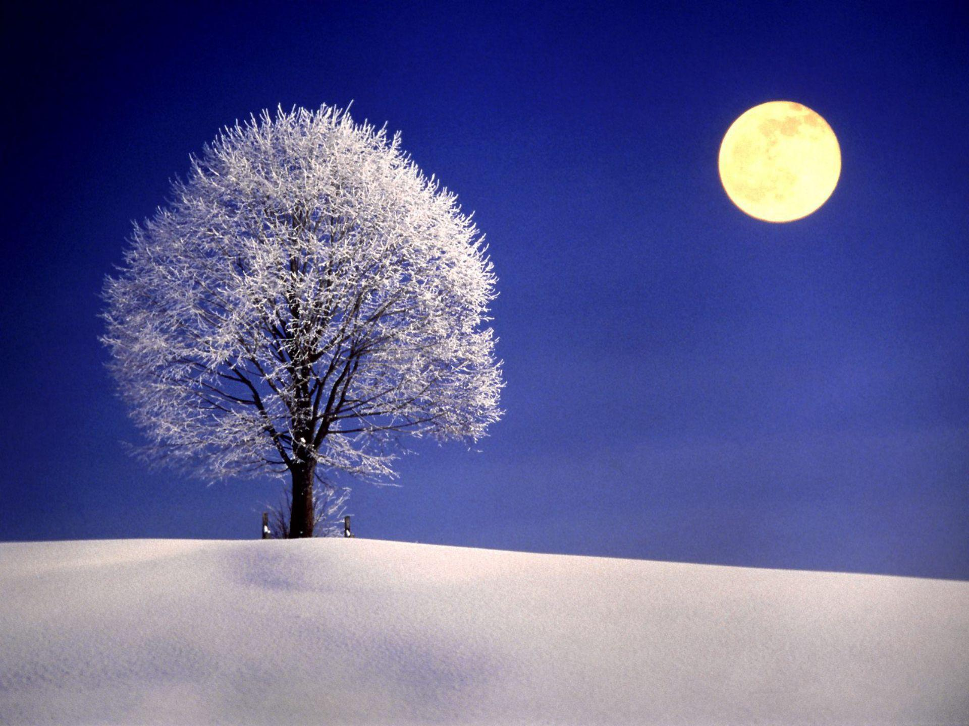 Winter Night with Full Moon widescreen wallpaper   Wide-