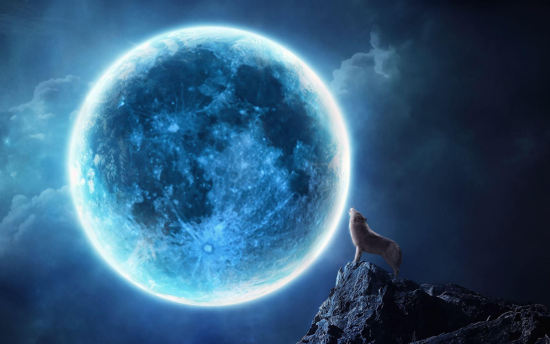 Howling wolf full moon Wallpapers   Pictures