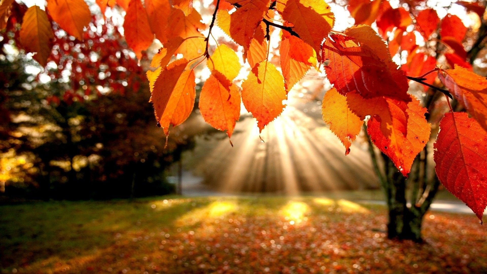 Fall Pics Wallpapers (71+ background pictures)