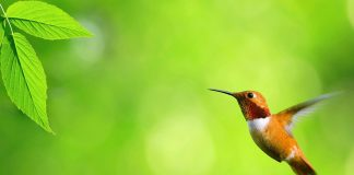 Birds Wallpapers.jpg