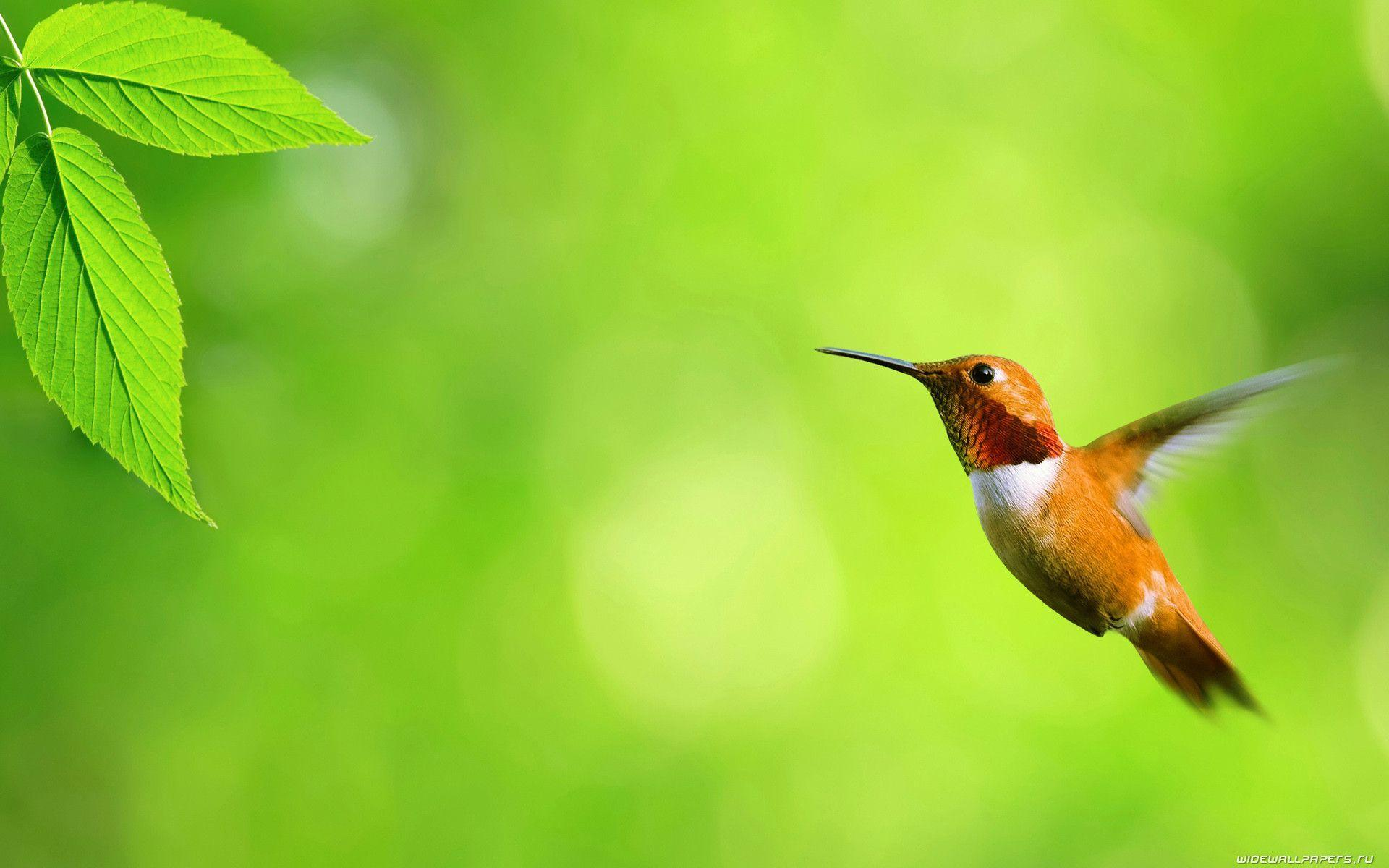 A selection of 10 Image of Birds in HD quality