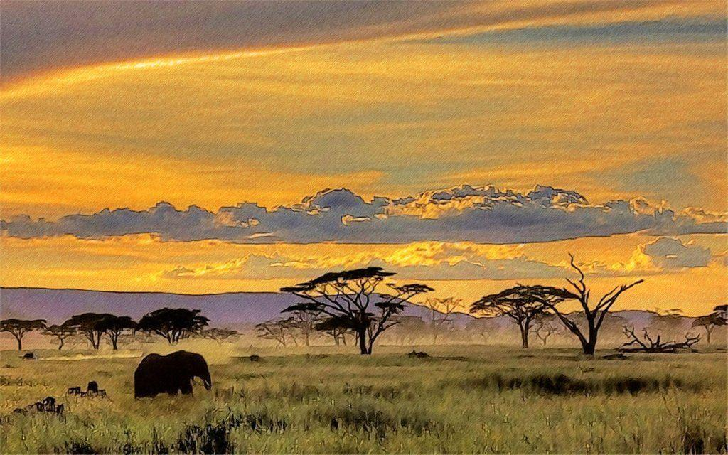 Safari Wallpaper | coolstyle wallpapers.