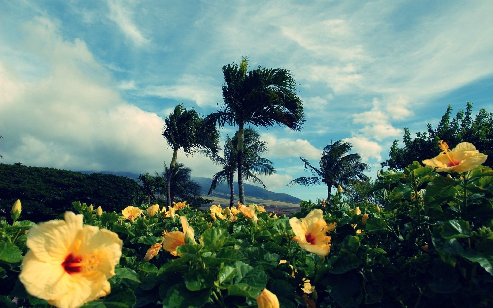 Tropical Flower Wallpapers Group (78+)
