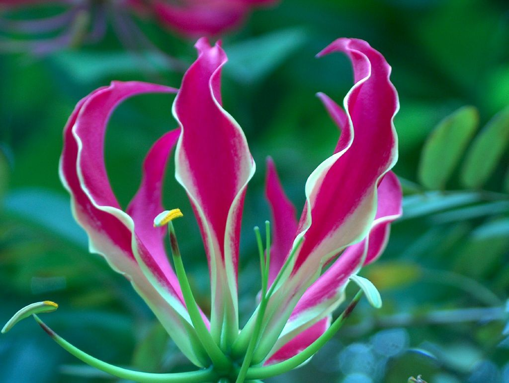 up close flower photos | Care for a bit of tea? they ask. Having ...