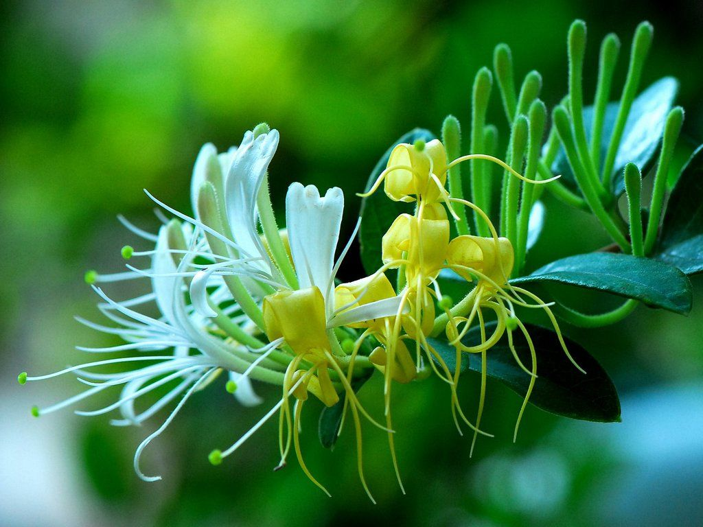 114 best wild flowers images on Pinterest | Exotic flowers, Wild ...