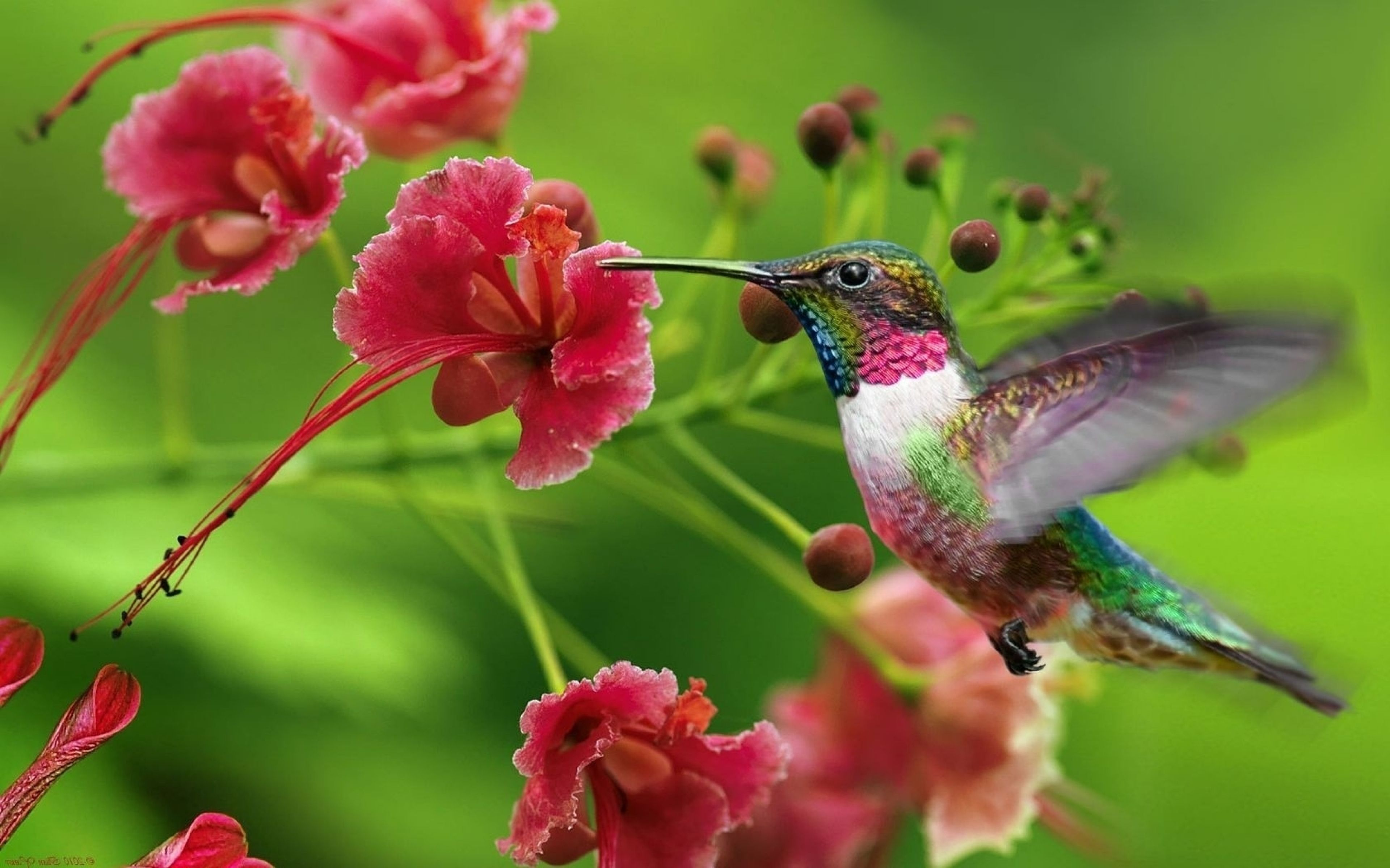 Backgrounds For Exotic Flower Wallpaper Backgrounds | www ...