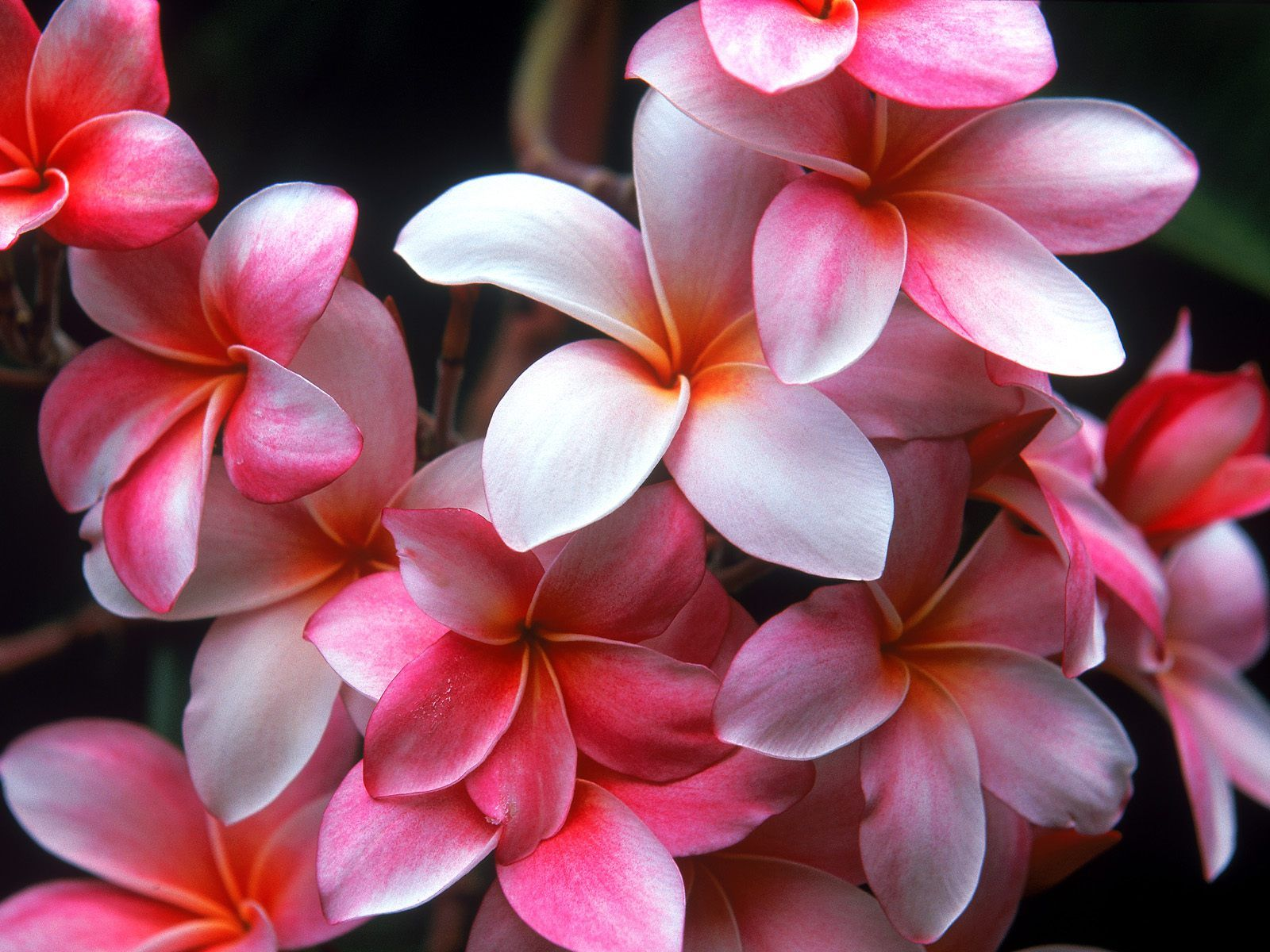 Hawaiian Tropical Flowers Images - Reverse Search