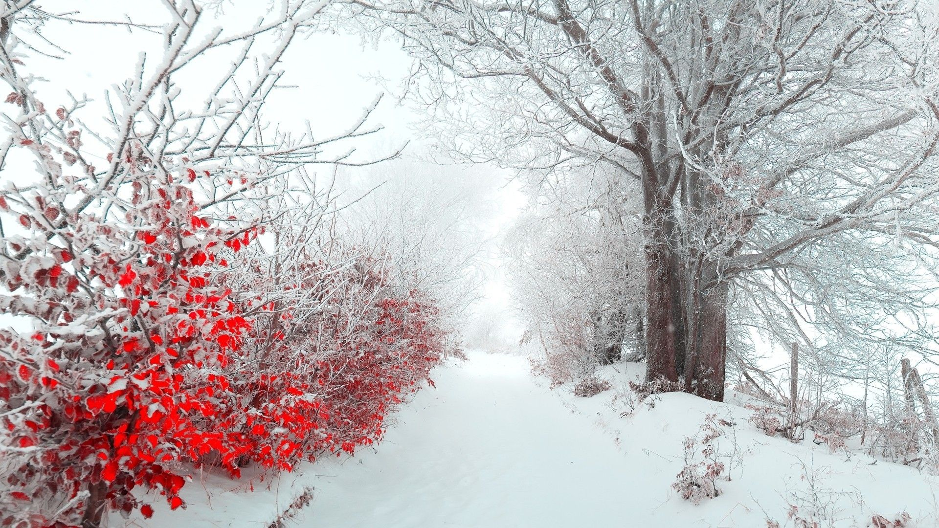 High Quality Images Collection of Winter Flower: Iago Kiley
