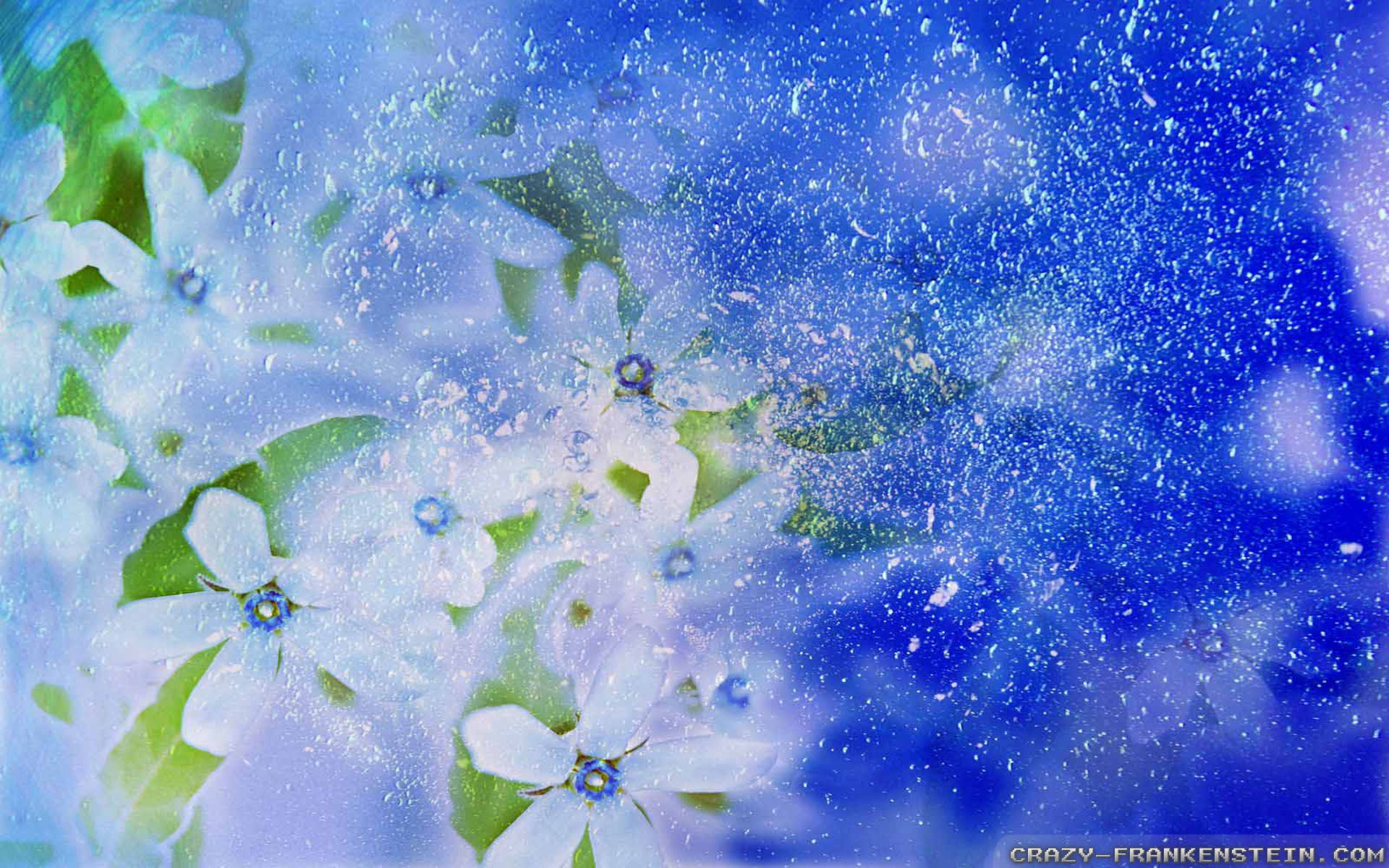 winter flowers Wallpapers Backgrounds Download free winter ...