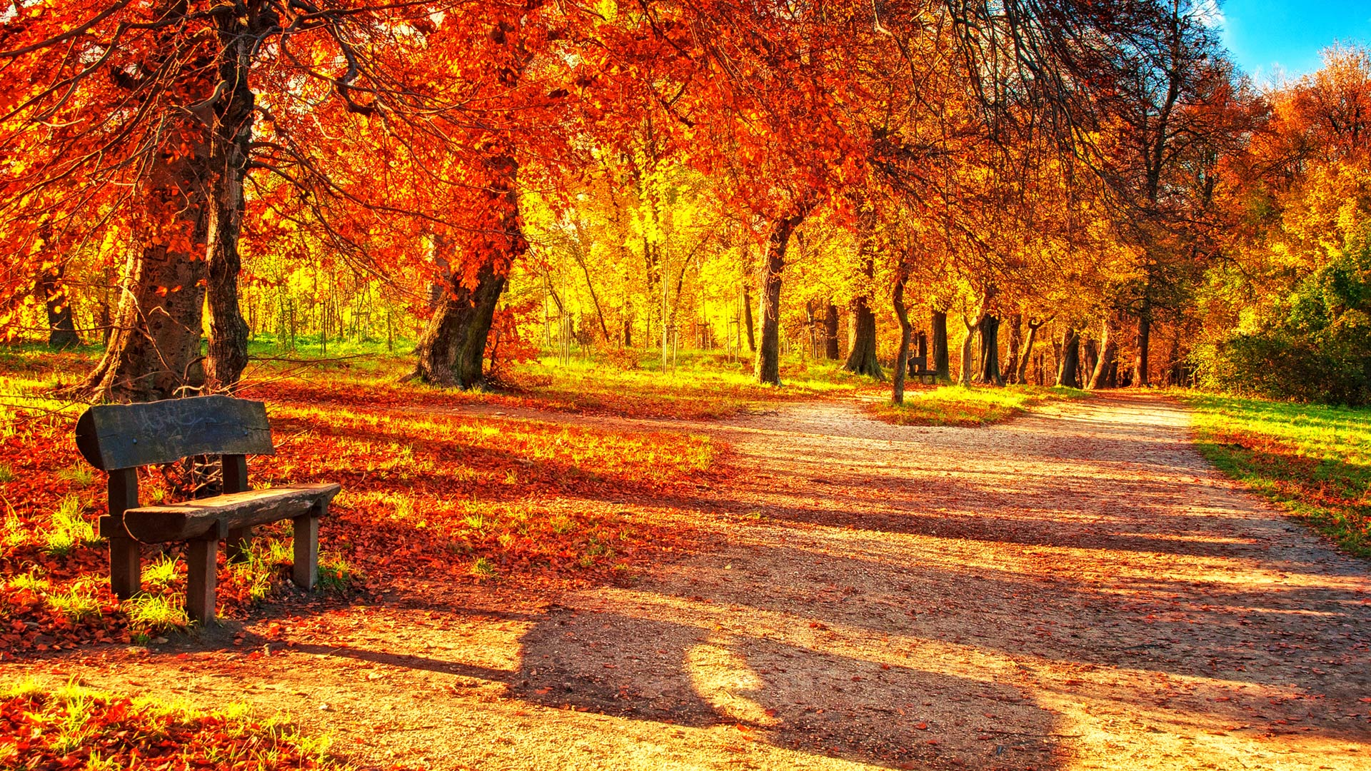 Wallpaper's Collection: «Autumn Leaves Wallpapers»